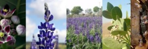 Assessing alternative management programs for invasive alien pollinator species