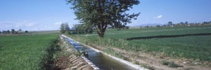 Water management by plants under uncertain availability